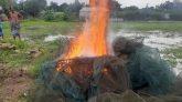 বাসাইলে প্রশাসনের অভিযানে বিপুল পরিমাণ চায়না জাল ধ্বংস
