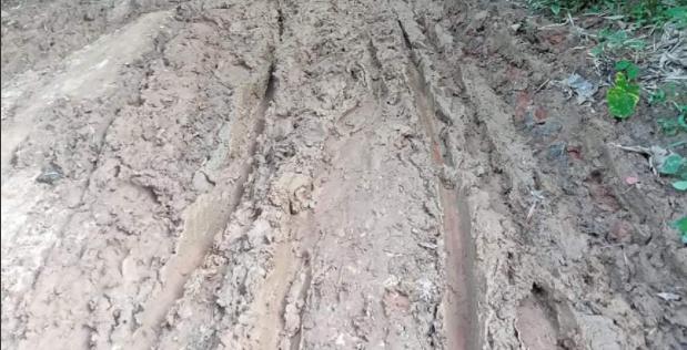 সখীপুরে বাগবেড় থেকে ইছাদিঘী ও কামার পাড়া থেকে গজারিয়া কাদা রাস্তায় চরম দুর্ভোগ এলাকাবাসীর